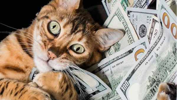 Где ты девал деньги?