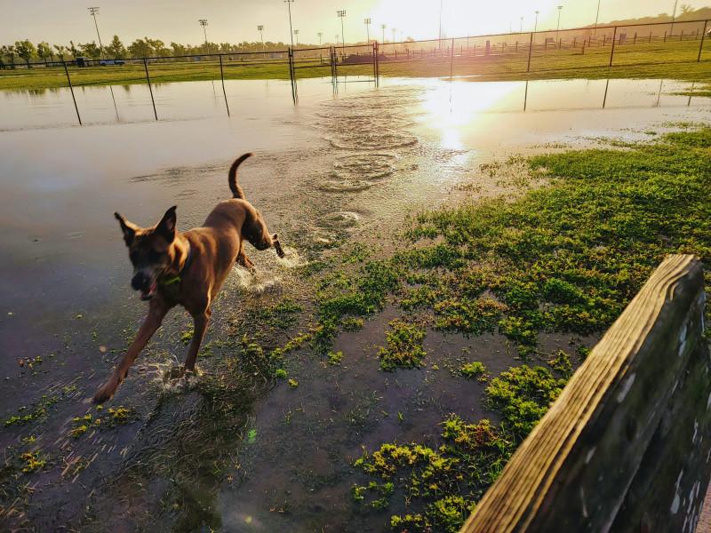 Собака радуется морю обнаруженному в собачьем парке. Вчера утром.