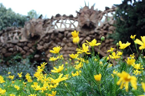 Цветы и камень в парке Гуэль
