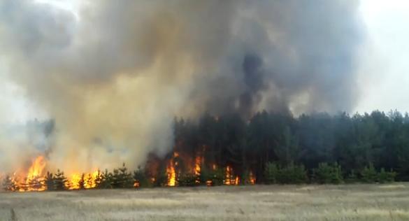 Пожары в Тольятти: город поделен огнем пополам. Жертв пока нет
