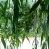 Двор за листьями