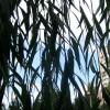 Небо за листьями