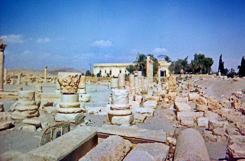 12-Пальмира.jpg