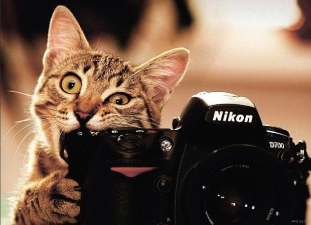 Поздравления с всемирным днем кошек 62