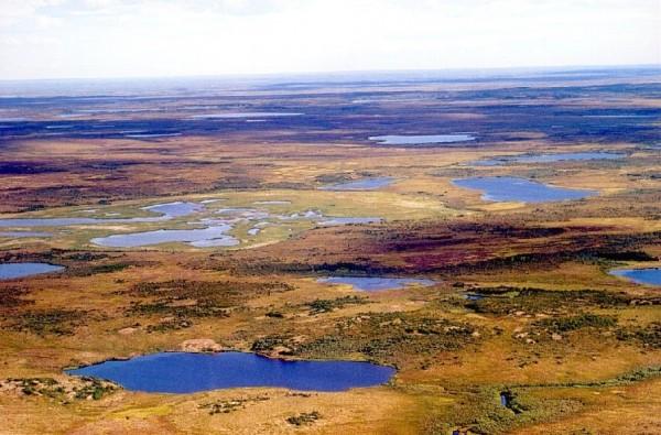 Tundra_in_Siberia