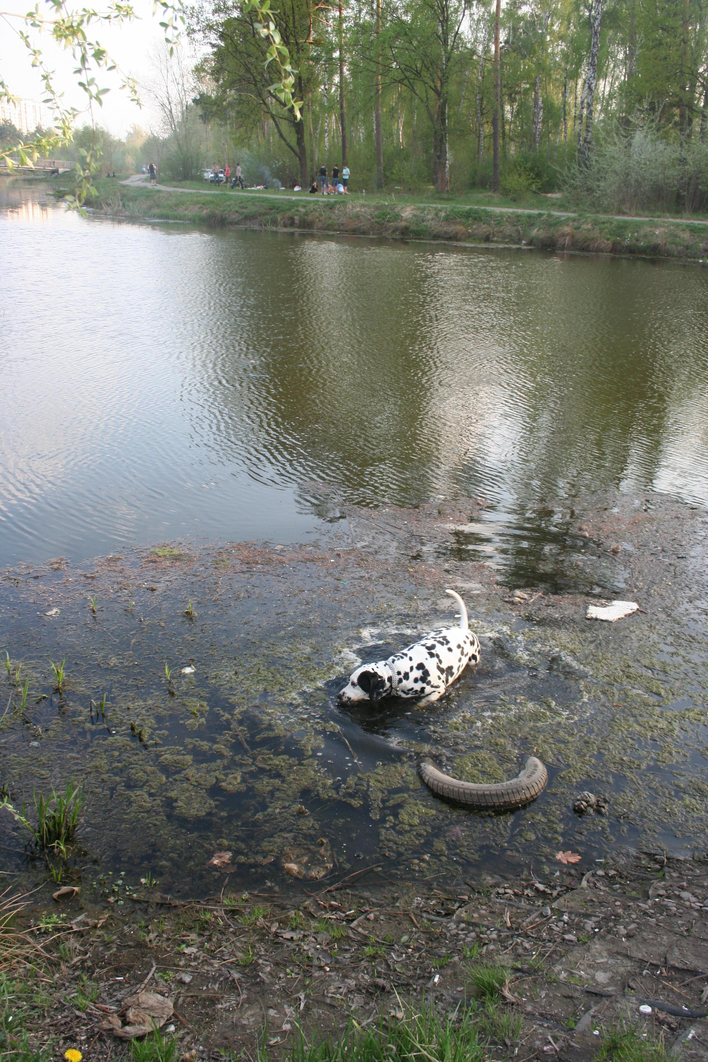 первое болото
