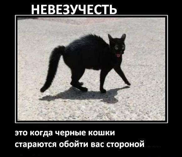 1375899364_megakote.ru_cats_m0000001_0532