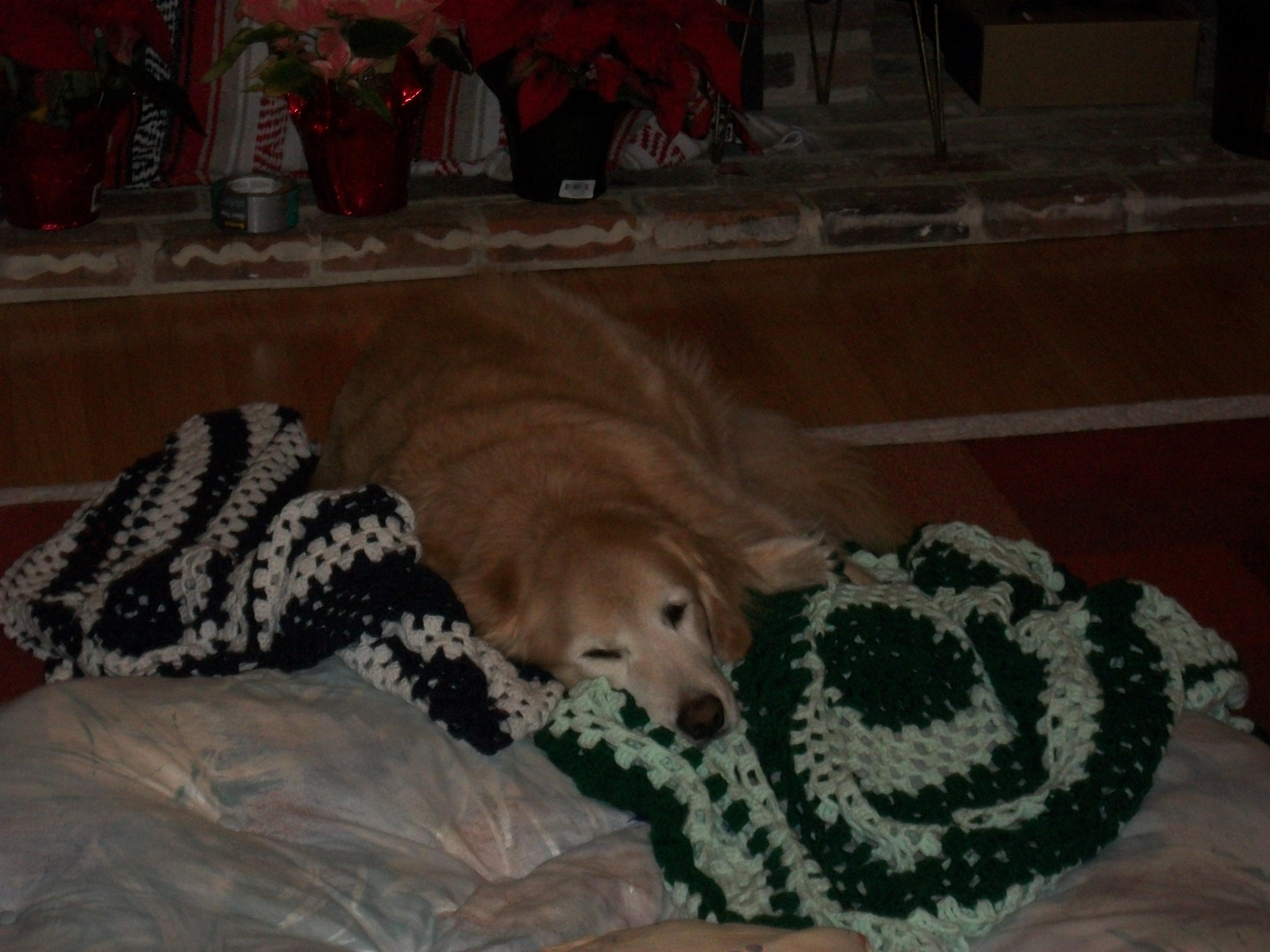 Bella comfy nap