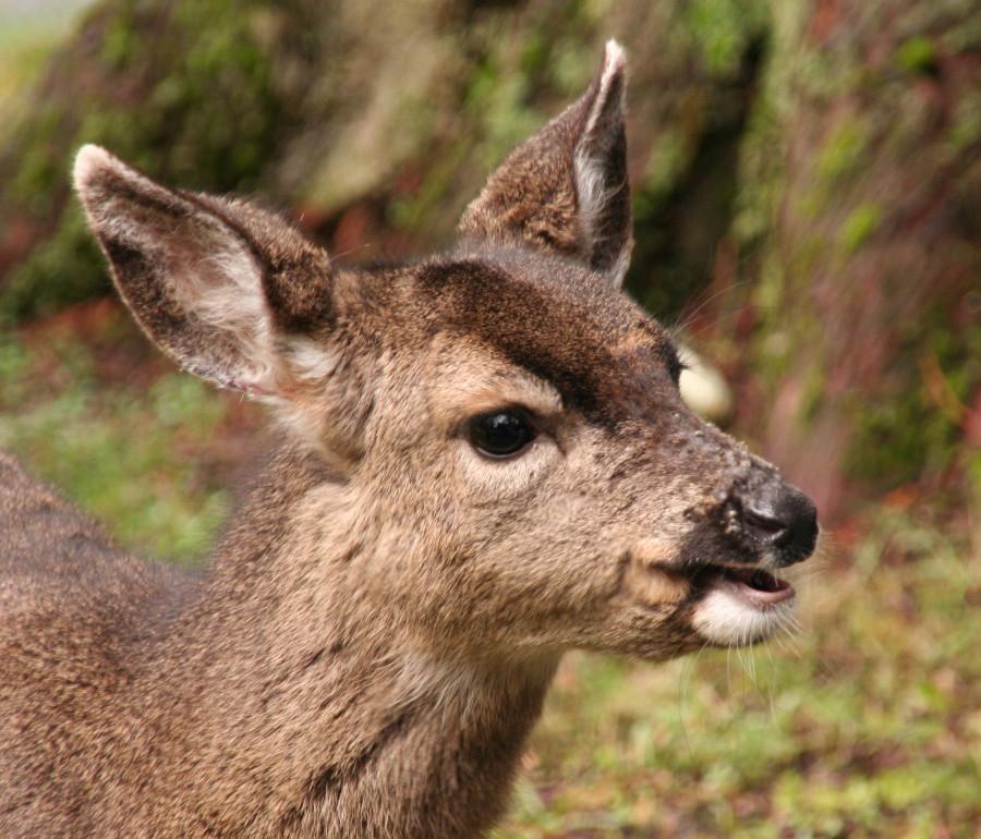 23 feb 2013 baby deer 6