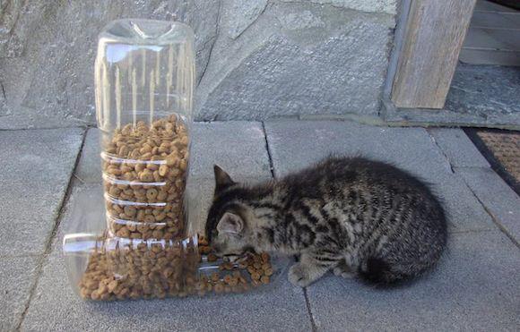 Сделать кормушку для кошки