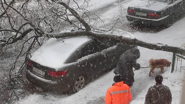 дерево завалено на машину