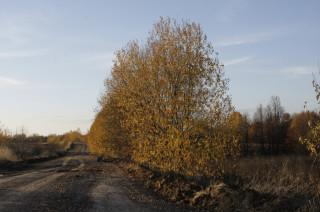 Осенние дороги