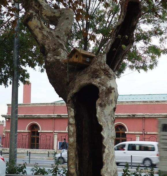 скворечник возле здания муниципалитета