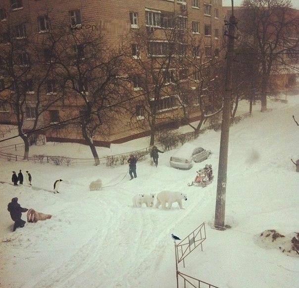 Снегопад в Курске