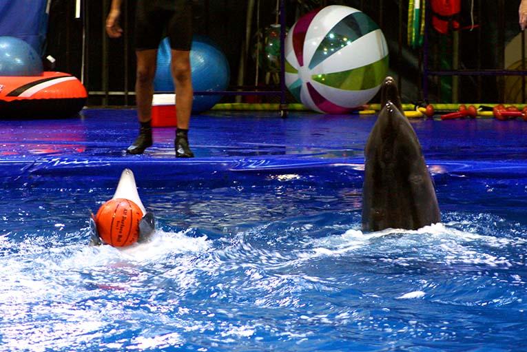 дельфины.jpg