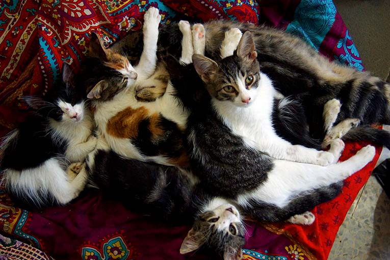 котяты2.jpg