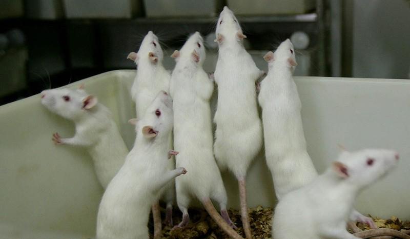 мыши1