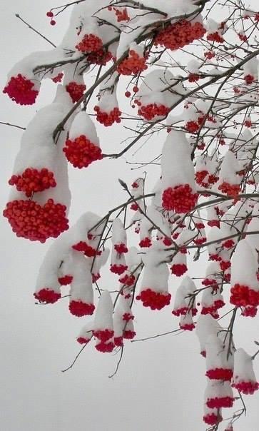 зима2