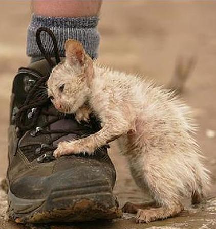 котенок_на_ботинке