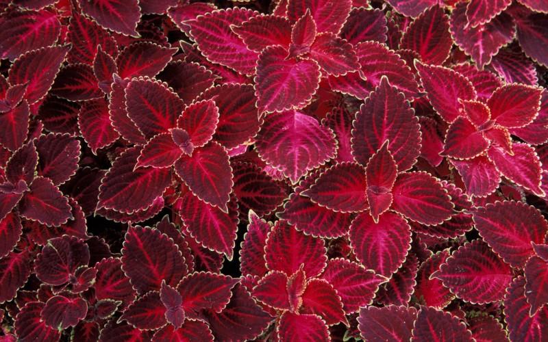leaves_texture1201
