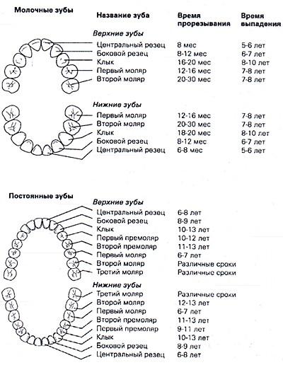 Какие зубы и в каком возрасте меняются у детей схема