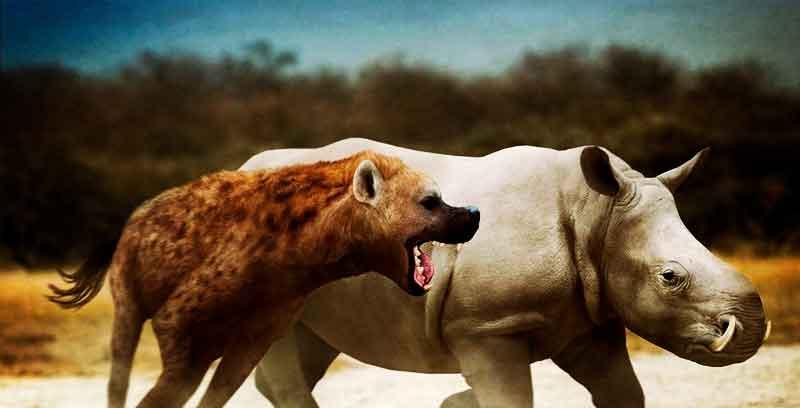 Доисторическая гиена.