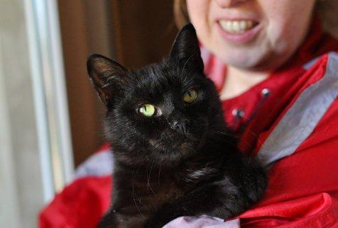 Барон, черный кот, приблизительно 2 года.  Важнецкий черный пантер, сама серьезность и...