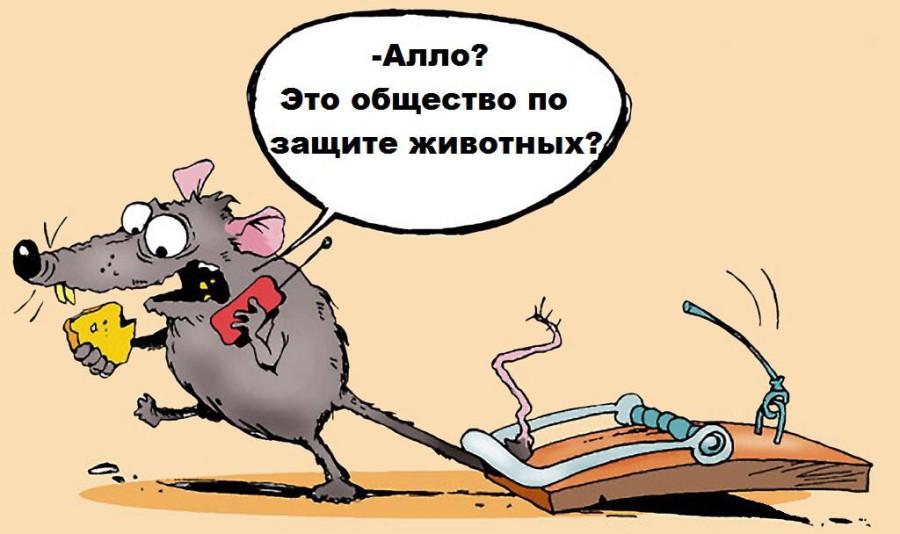 Allo_JEto_obshhestvo_zashhity_zhivotnykh-wap_sasisa_ru