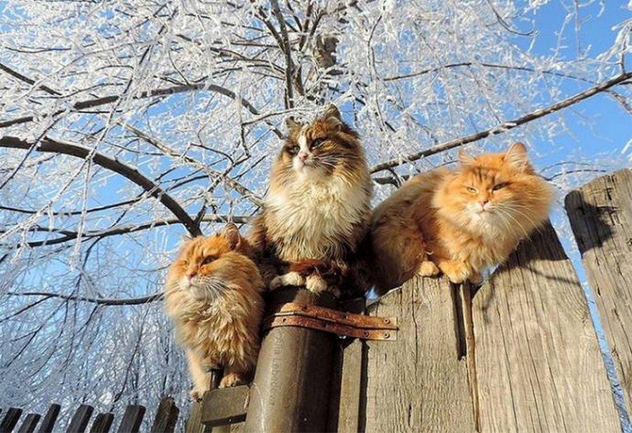 ryzhie-koty-v-barnaule-animal-reader.ru-003