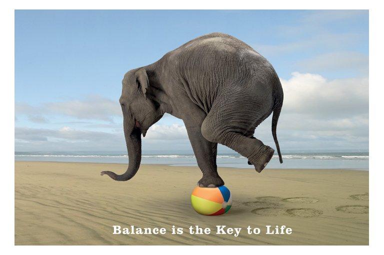 elephant-balance-chiropractic