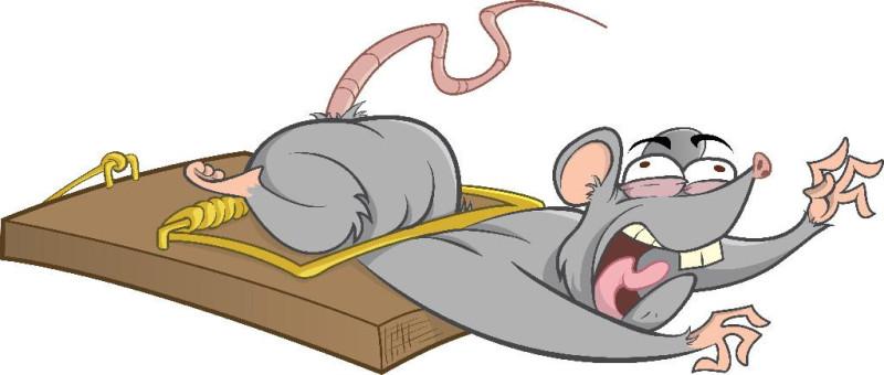 rat_in_trap_blrs[1]_full