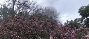magnolija2