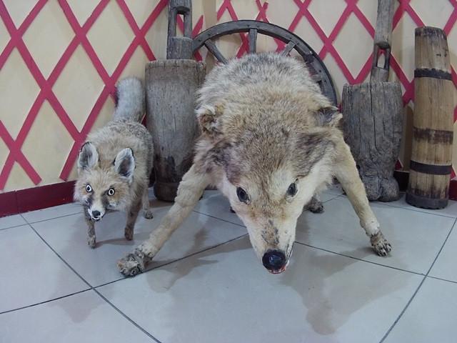 суровая узбекская фауна