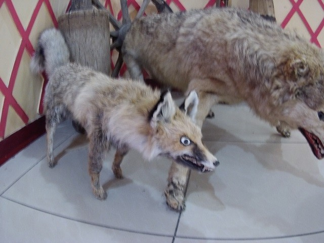 суровая узбекская фауна 1