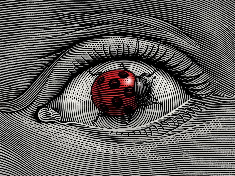 eyebug_kicsi