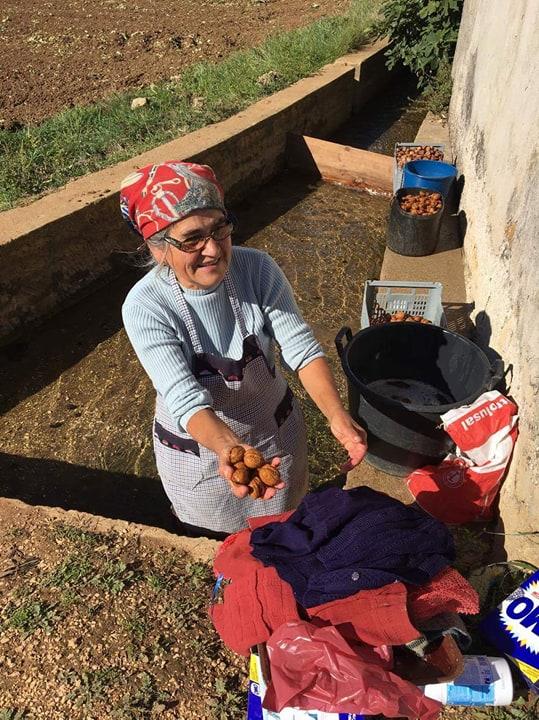 Нас угощают грецкими орехами