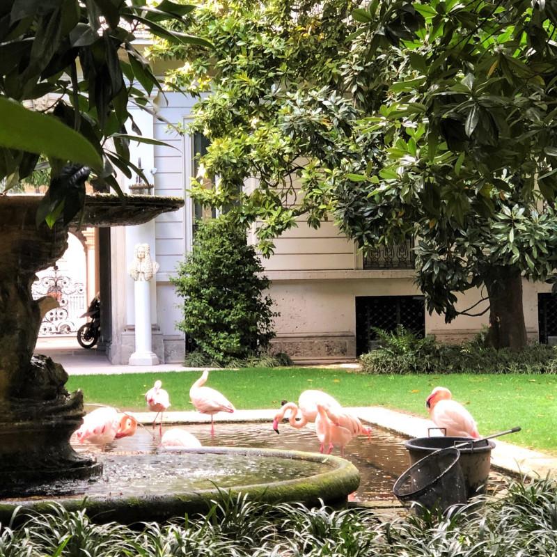 Розовые фламинго в Милане