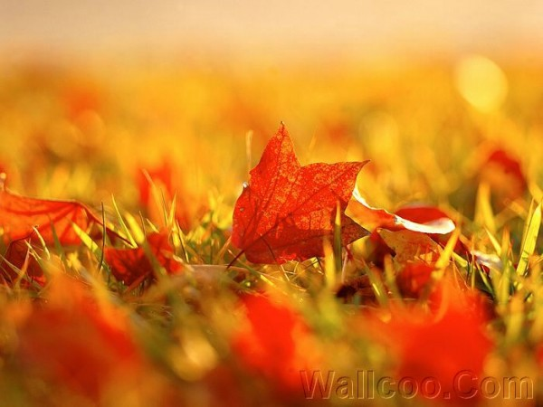 34012836_Fall_Secenry_Autumn_Leaves_162455