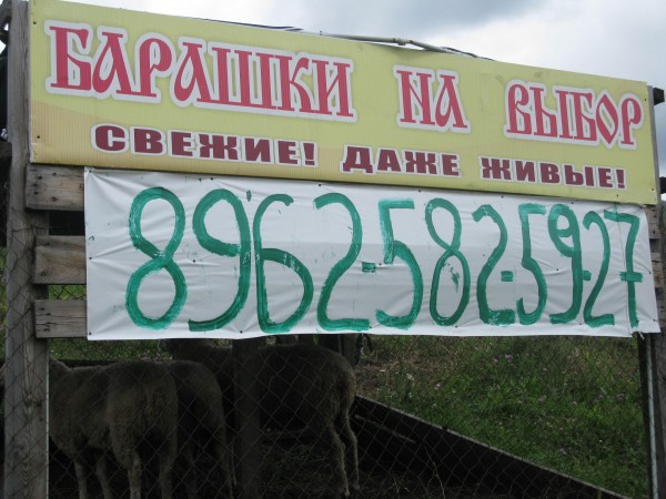 Алтай  2014 028