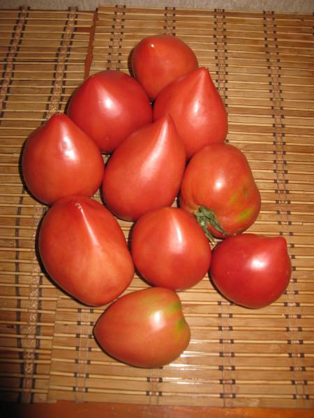 помидоры 2014 001