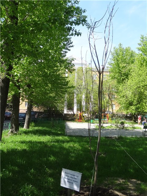 Народный парк Белорусская 1.jpg