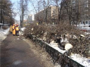 Куда исчезают деревья_1.jpg