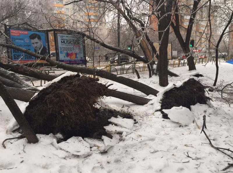 Ледяной дождь Ирина Афенберг 1.jpg