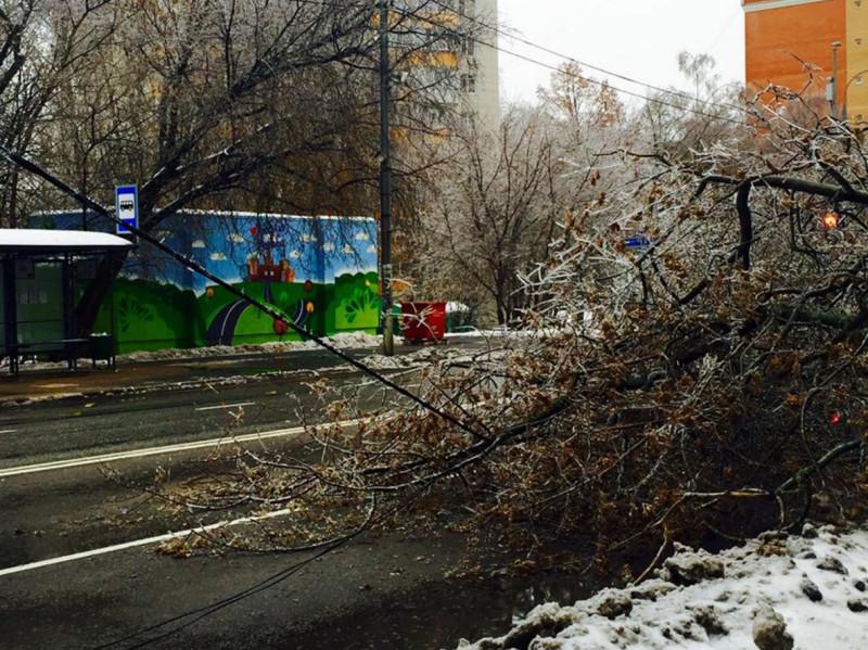 Ледяной дождь Ирина Афенберг 2.jpg