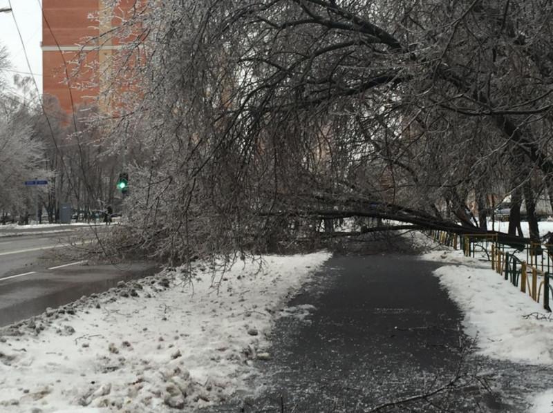 Ледяной дождь Ирина Афенберг 3.jpg