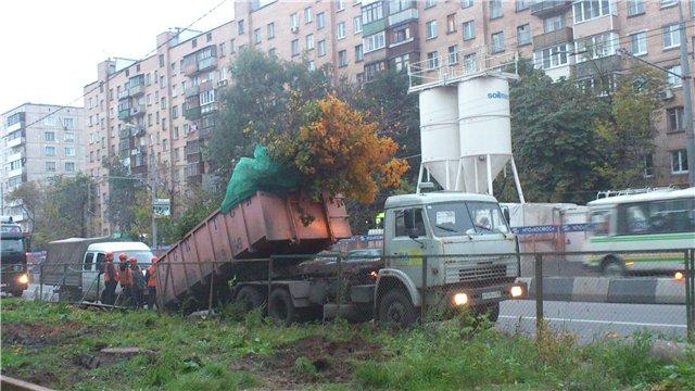 Куда исчезают деревья_13