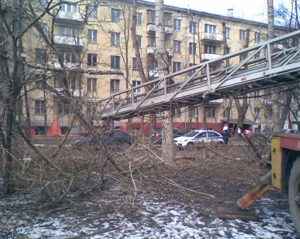 Карбышева спил деревьев 4.jpg