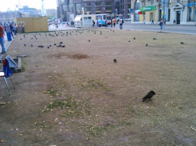 Митинг за траву_14