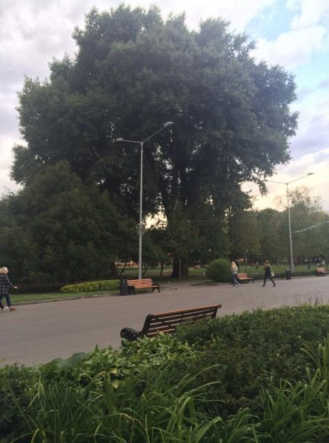 Лесоповал в парке Горького_13