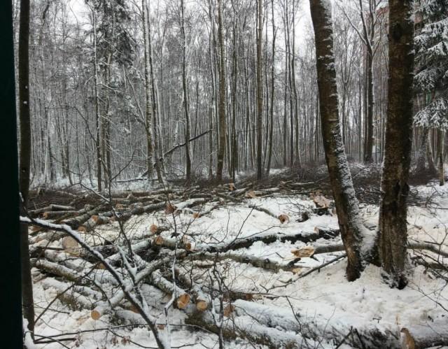 Вырубка Троицкого леса_7
